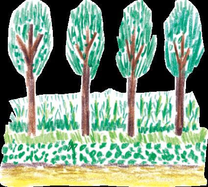 Zelkova trees along Itsukaichi-kaido Ave